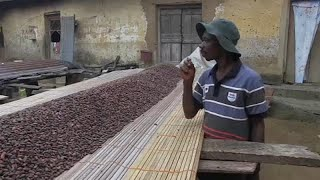 Ivory Coast and Ghana suspend sales of cocoa