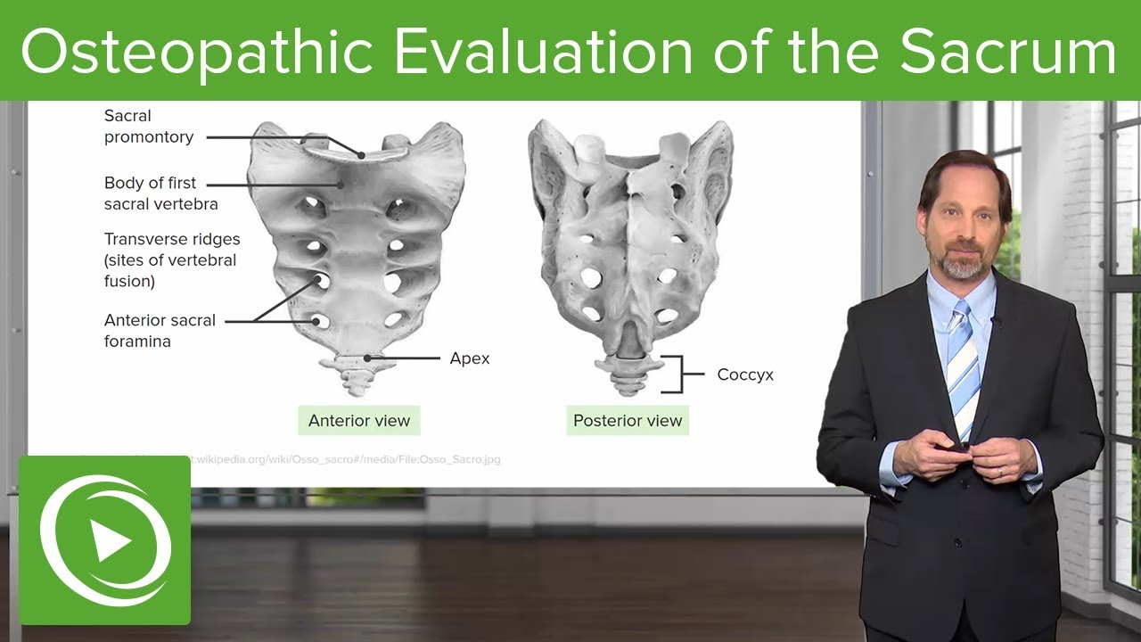 Osteopathic Evaluation of the Sacrum – Osteopathic Manipulative Medicine (OMM) | Lecturio