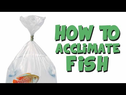 HOW TO: Add New Fish To An Aquarium