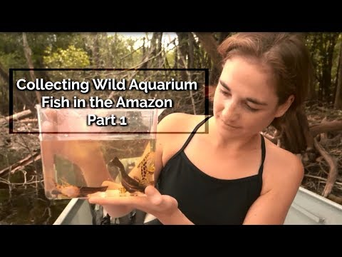Into The Amazon - Collecting Wild Aquarium Fish In The Amazon: Part 1 - Episode 7
