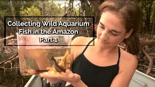 Gambar cover Into the Amazon - Collecting Wild Aquarium Fish in the Amazon: Part 1 - Episode 7