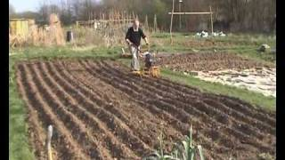 From seed to loaf (part 1 of 2) allotment scale production of bread making wheat