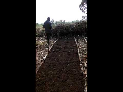 Assisting Goodies Bebs Farms LTD in her organic farming (Part 2)