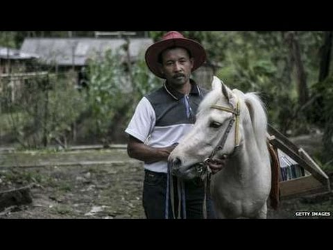 The Indonesian horse that acts as a library