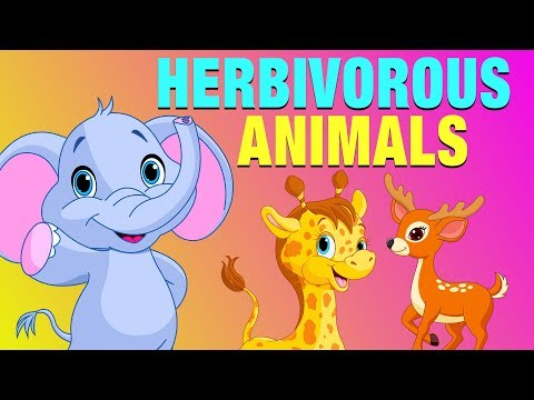 Herbivorous Animals Pictures With Names | Educational Video for Kids | #KidsLearning
