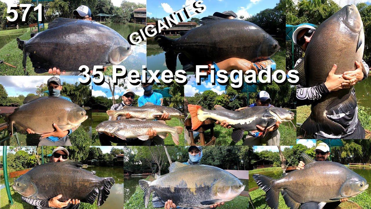 Água Verde - Uma pescaria de cansar o braço com tantos peixes - Programa 571