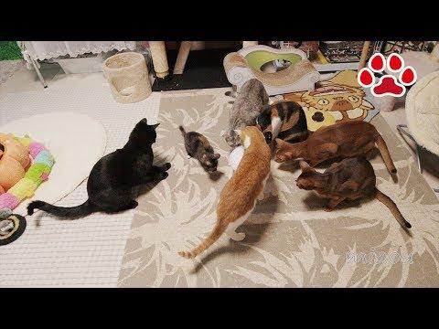 くろの玩具【瀬戸の黒猫日記】Cat's eyes friendly LED toy
