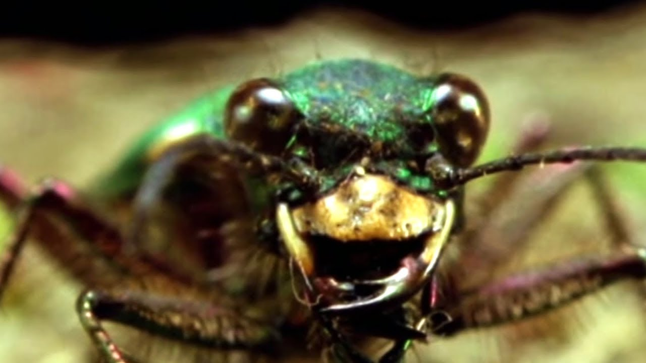 Facts About Beetles - Secret Nature