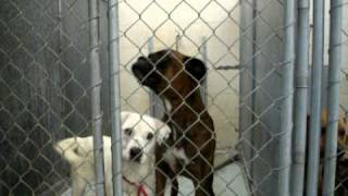 Boxer & Cute Terrier Dog For Adoption In Louisiana