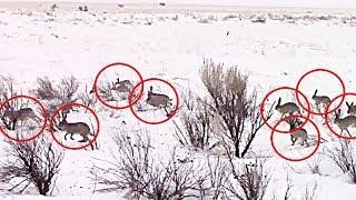 1000 зайцев, а ружье дома БЛ*ДЬ. Охотники ПЛАЧУТ и глотают СЛЮНИ