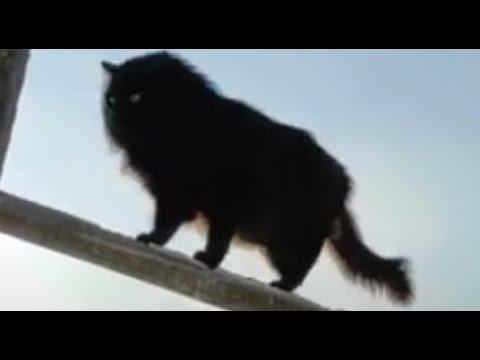 Дрессировка кота Чернухи умные животные | Cat training smart animals
