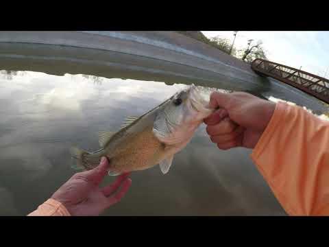 The Sunset Canal Bass 4K