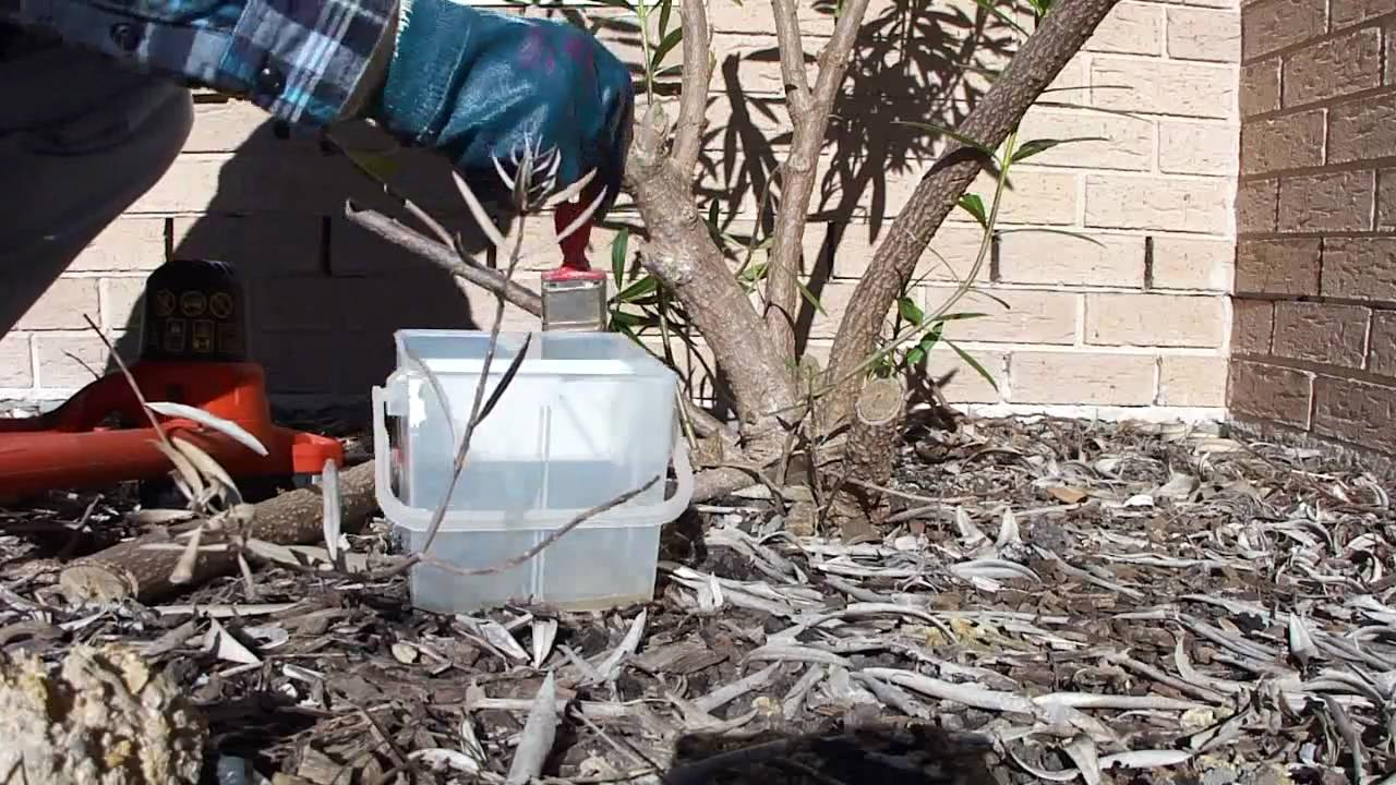 Kill unwanted trees and shrubs with Glyphosate 360