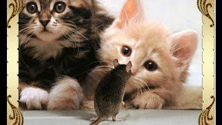Эти удивительные животные Кошки