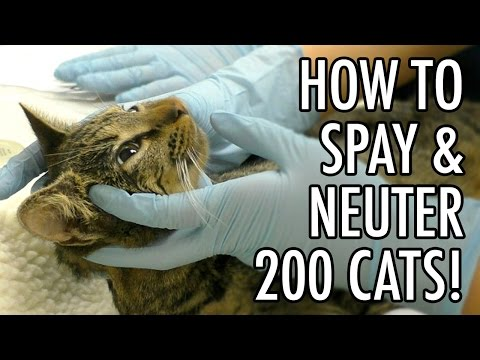 How To Spay & Neuter 200+ Feral Cats!