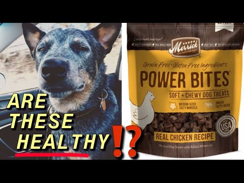 HEALTHY DOG TREATS | Blue Heeler TRICKS