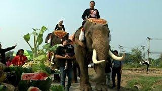 Как в Таиланде празднуют День слона