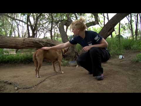 San Antonio Dog Rescue