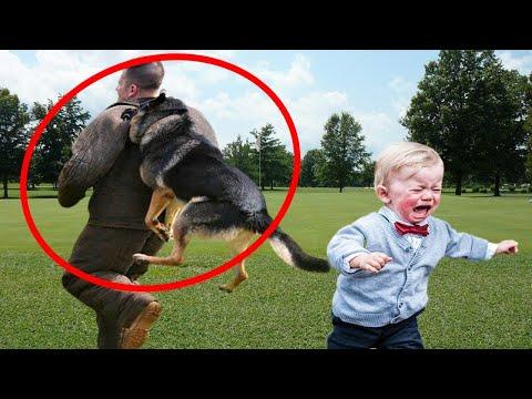 Njemački Psi Ovčari brane djecu od LOPOVA ! (Testiranje Psa)