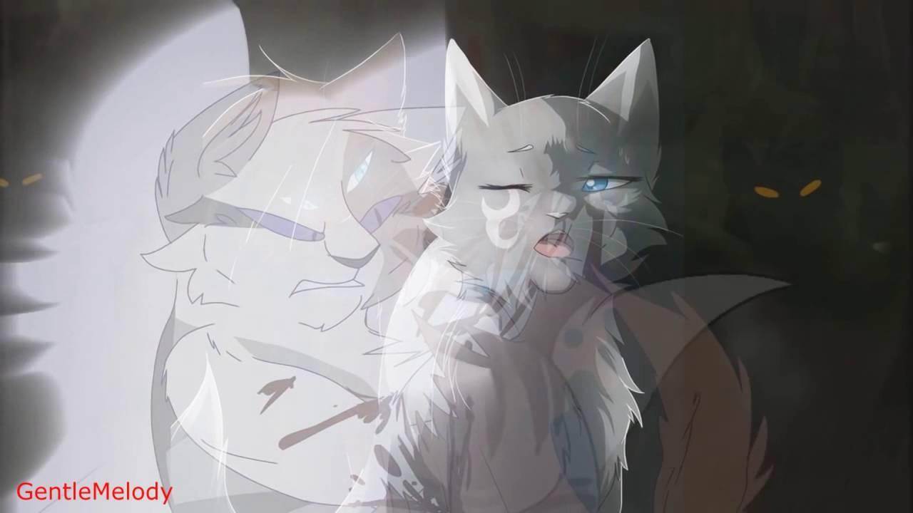 Коты в дубае