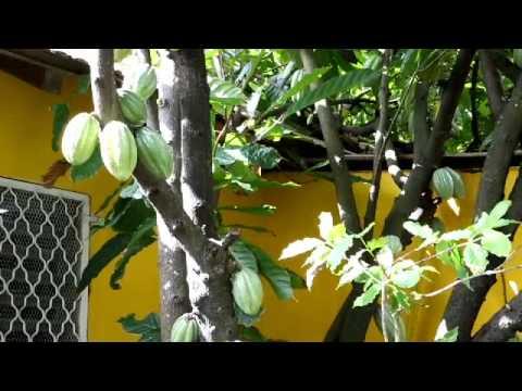 Parcours d'Alain PAGESY, Fondateur et gérant de la Maison du Cacao