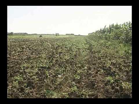 Diversifican producciones agrícolas en municipio camagüeyano de Sibanicú