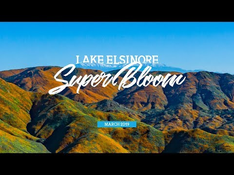 Drone View of the Lake Elsinore Super Bloom 2019 - Vlog