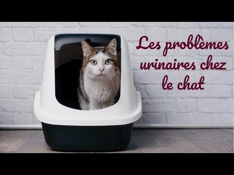 Les Problèmes Urinaires Chez Le Chat