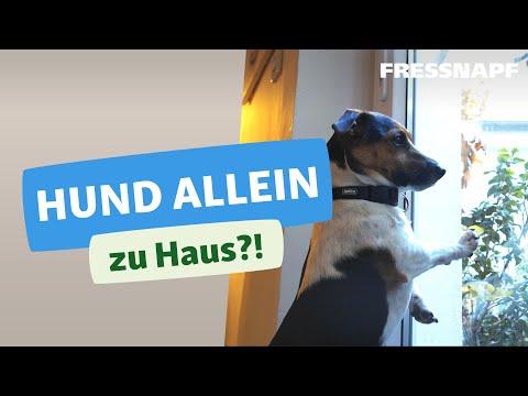 Hundeerziehung Infos Bei Fressnapf Fressnapf