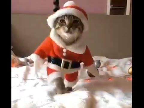 Jingle Bells Song Bhojpuri Version Must Watch