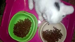 Кошка и котята в новом доме. Видео от тети Оли.