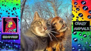Funny and cute animals -2019