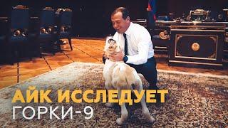 Подаренный Медведеву щенок алабая обживается в «Горках»