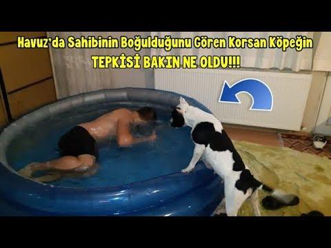 Havuz'da Sahibinin Boğulduğunu Gören Korsan Köpeğin Tepkisi BAKIN NE OLDU !!!!