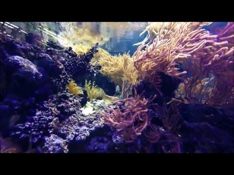 Amazing THAILAND Underwater World - Ocean & Aquarium