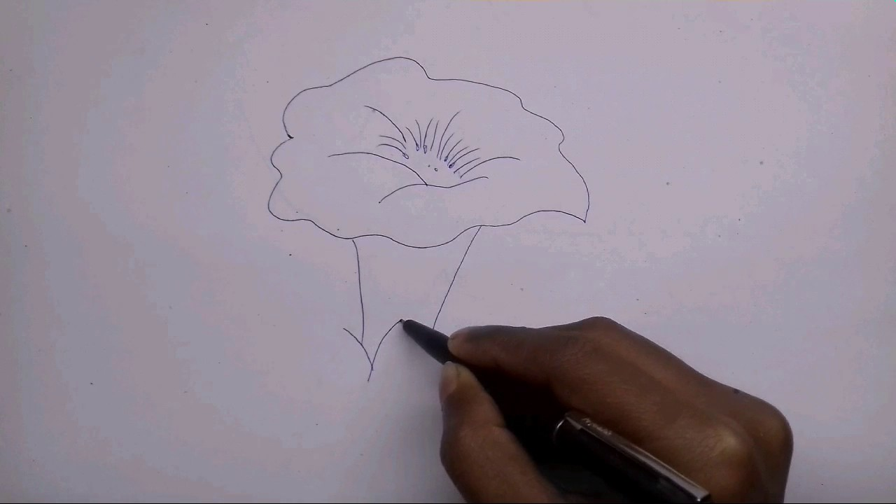 How to draw a datura flower youtube how to draw a datura flower ccuart Gallery