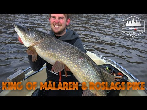 King of Mälaren & Roslags Pike