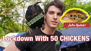 How We Kept 50 RARE CHICKENS In OUR LIVINGROOM | How to Raise Baby Chickens from Eggs | Ostrich Plug