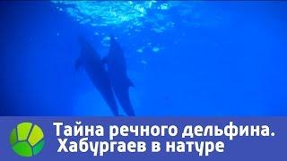 Тайна речного дельфина - Хабургаев в натуре | Живая Планета