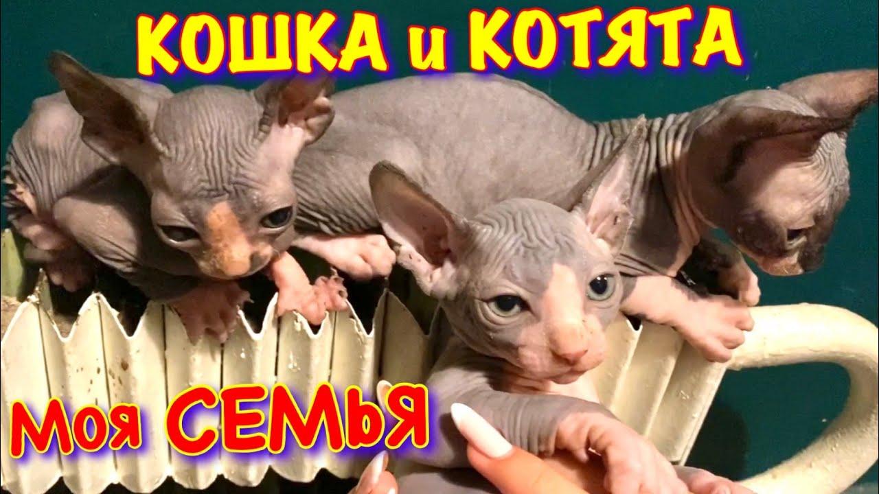 КОШКА Мама и КОТЯТА 😻 СЕМЬЯ Кота Миллиона! ПЕРВЫЕ Уникальные КАДРЫ