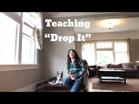 "teach-your-dog-""drop-it"""