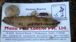 Pest Control South Delhi 9811191551