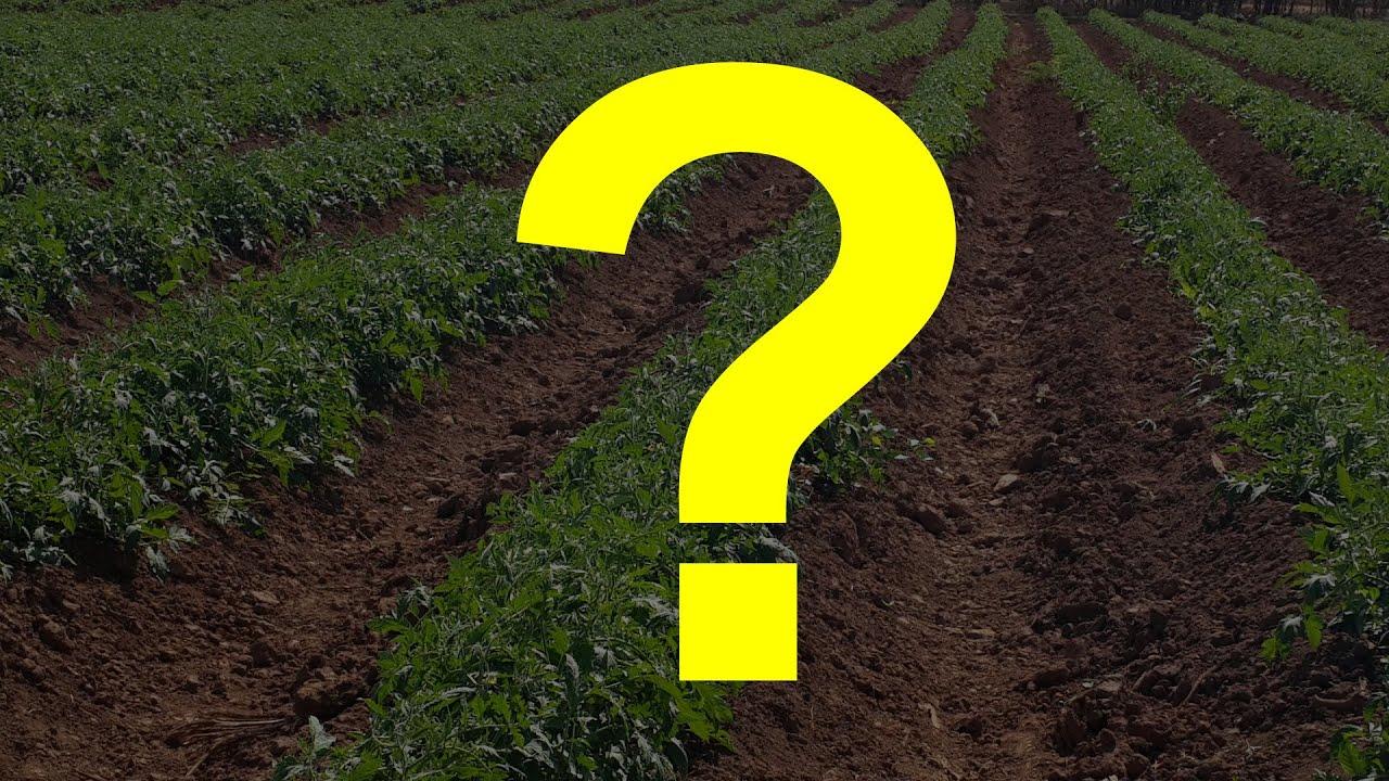 ¿Son Buenas las LEONARDITAS y las Tierras de DIATOMEAS para los Cultivos?