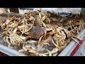Crabbing the Oregon Coast (GoPro in Crab Trap)