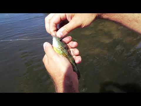 #LearntoFishOnline | Fishing Equipment
