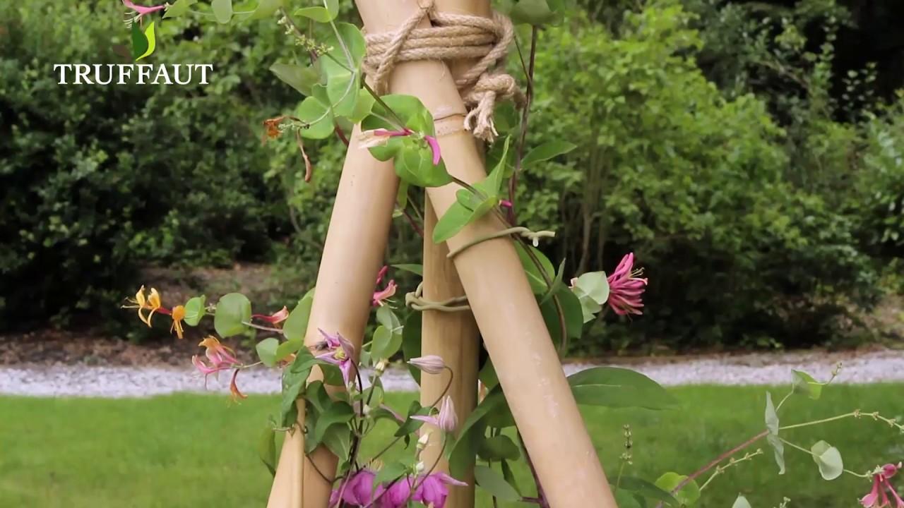 Creer Un Support Pour Plantes Grimpantes Plein Soleil Jardinerie Truffaut Tv