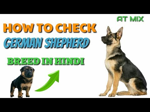 How to Check Pure German Shepherd Breed In Hindi | Know Your Breed In hindi |