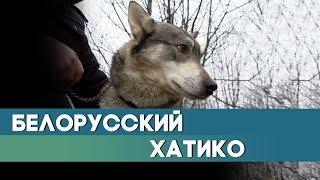 Белорусский Хатико: два с половиной года лайка ждала встречи с хозяином