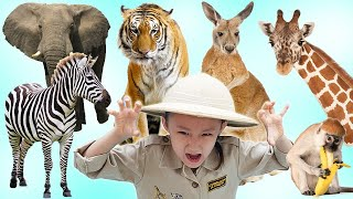 What Do You See ? Song / Learn English Animals with LoveStar | Nursery rhymes & Kids song