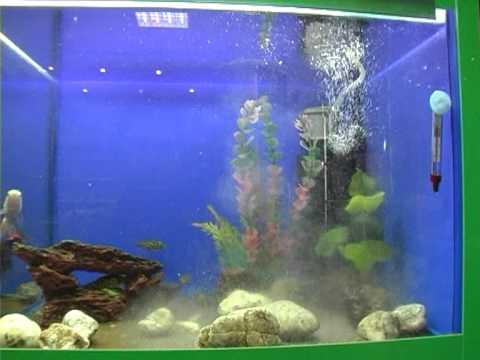 Купить аквариум tetra cascade globe черный для петушка и золотой рыбки 6,8 л. Доставка по украине: харьков, киев, днепропетровск, одесса, запорожье, львов и другие города. Назначение, для петушка и золотой рыбки.